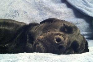 Lorelei's dog Cali