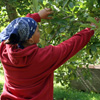 Worker in Orchard
