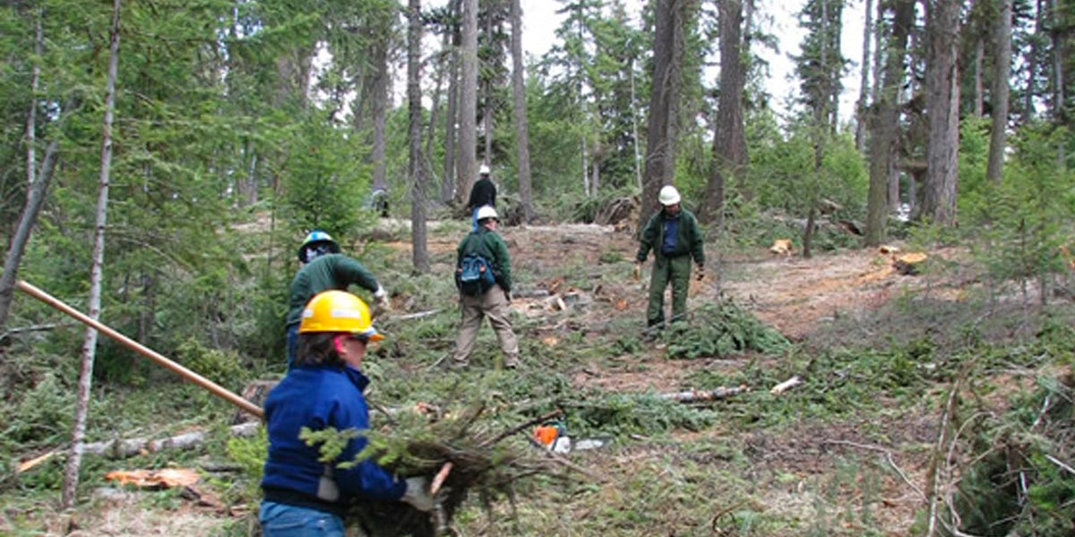 Crew removing branches, shrubs and downed trees. U.S. Forest Service
